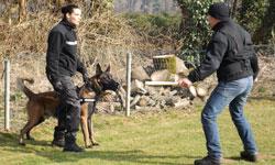 formation maitre chien ascci